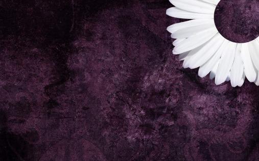 Purple Daisy Tumblr Backgrounds (2)