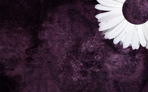 Purple Daisy Tumblr Backgrounds (2)